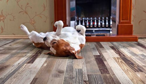 dog on wooden floor